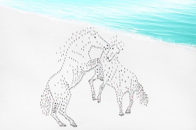 Horses © Didier de Radiguès